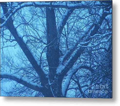 Snow Metal Print featuring the photograph After The Storm by Randy Edwards