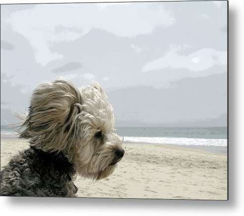 Beach Metal Print featuring the photograph Against The Wind by Joanne Riske