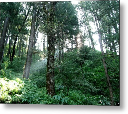 Forests Metal Print featuring the photograph All Things Bright And Beautiful by Sunaina Serna Ahluwalia