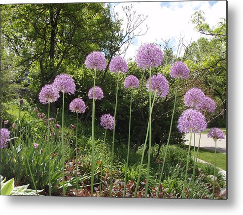 Purple Metal Print featuring the photograph Allimum Cont by Tim Donovan