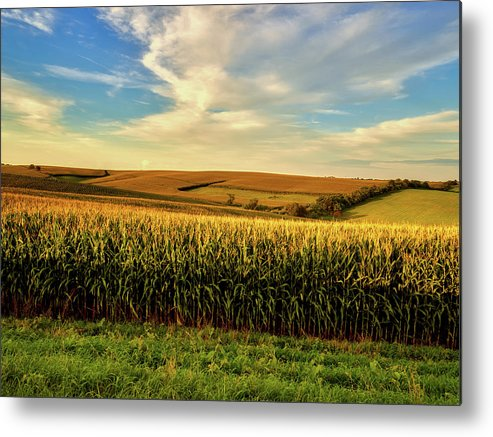 Jones County Metal Print featuring the photograph Amber Waves Of Grain by Mountain Dreams