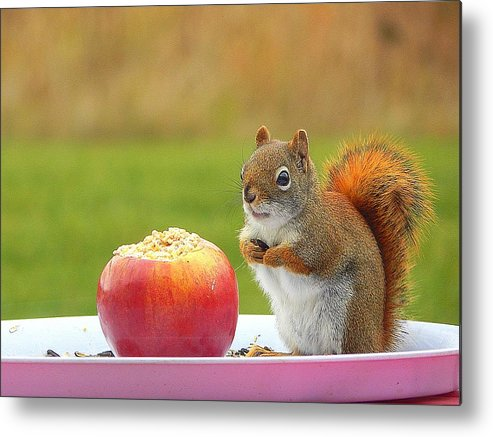 An Apple A Day Metal Print featuring the photograph An Apple A Day by Karen Cook