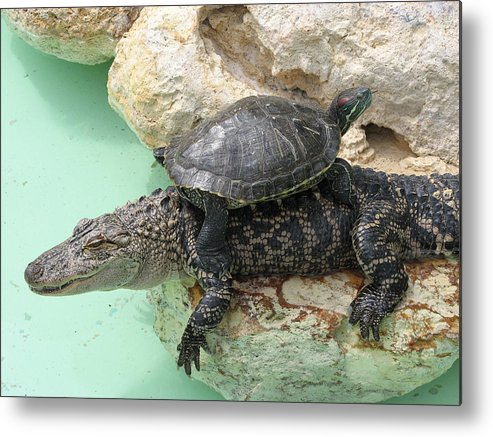 Turtle Metal Print featuring the photograph An Unlikely Pair by Stacey May