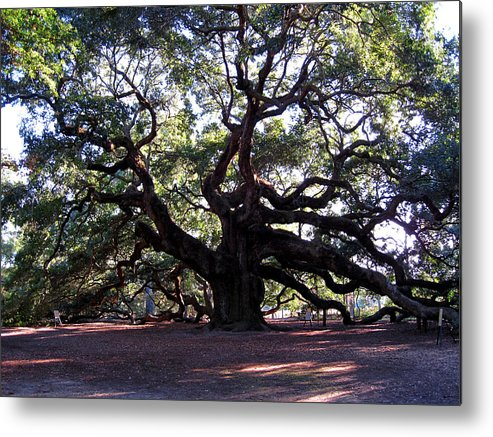 Photography Metal Print featuring the photograph Angel Oak II by Susanne Van Hulst