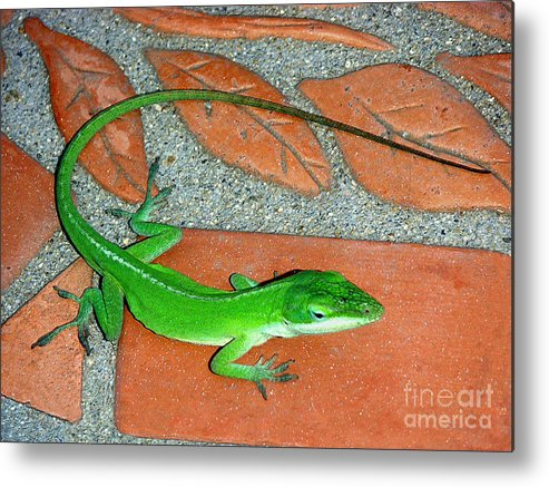 Nature Metal Print featuring the photograph Anole On Chair Tiles by Lucyna A M Green