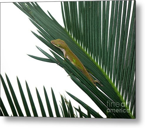 Nature Metal Print featuring the photograph Anole With Palm - Coy by Lucyna A M Green