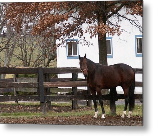 Horse Metal Print featuring the photograph Anticipation by Chuck Shafer