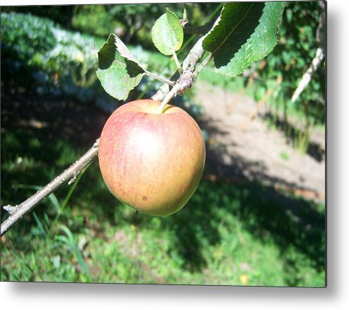 Apple Metal Print featuring the photograph Apple 104 by Ken Day