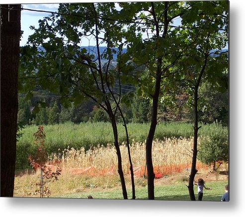Landscape Metal Print featuring the photograph Apple Hill Trees by Dawn Marie Black