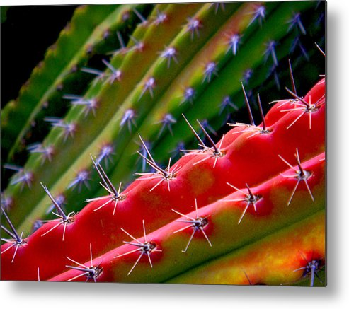 Cactus Metal Print featuring the photograph Arizon Colors by Shannon Ireland