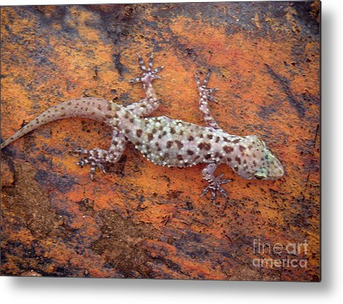 Nature Metal Print featuring the photograph Art Among The Ruins by Lucyna A M Green