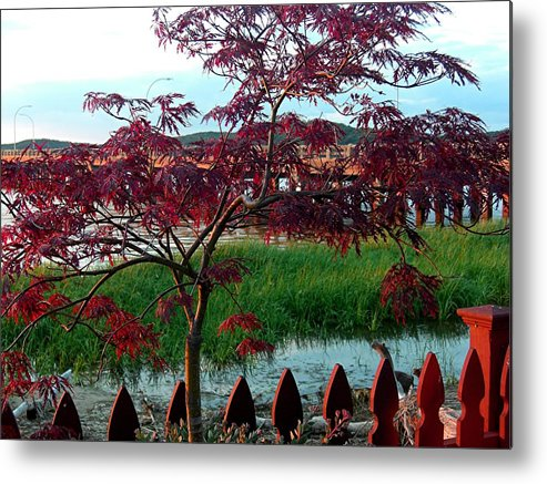 Maple Metal Print featuring the photograph Autumn Approaching by Caroline Urbania Naeem