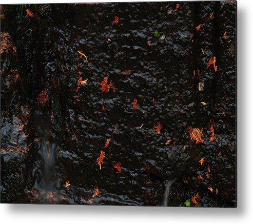Acadia Np Metal Print featuring the photograph Autumn Colors by Juergen Roth