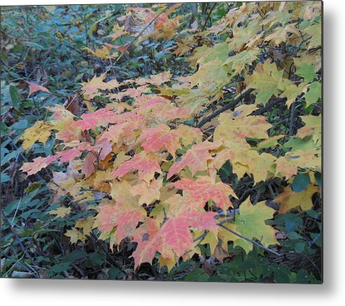 Nature Metal Print featuring the photograph Autumn Foliage by Ralph Baginski