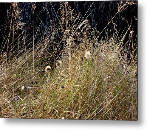 Natue Metal Print featuring the photograph Autumn Grass by Marilynne Bull
