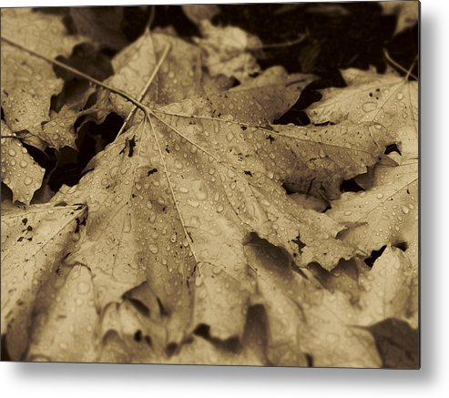 Leaves Metal Print featuring the photograph Autumn In Sepia by Scott Ballingall