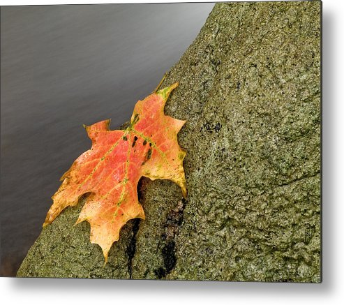 Autumn Metal Print featuring the photograph Autumn Leaf Study by Jim DeLillo