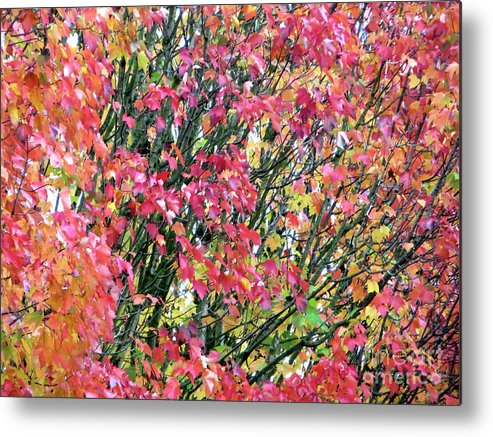 Adrian March Metal Print featuring the photograph Autumn Leaves 4 by Adrian March
