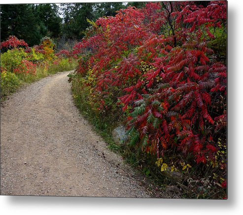 Autumn Fall Red Leaves Nature Path Hike Colorado Mountains Simple Zen Metal Print featuring the photograph Autumn Mesa Trail by George Tuffy
