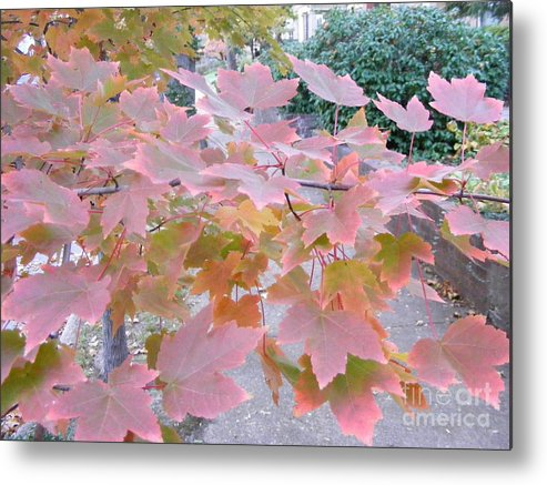 Photography Metal Print featuring the photograph Autumn Pink by Nancy Kane Chapman
