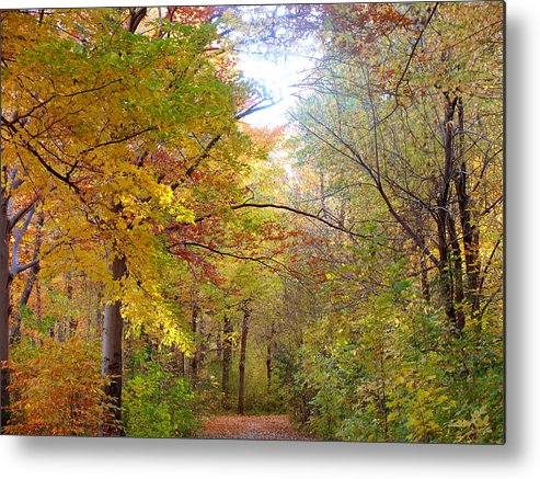 Trees Metal Print featuring the photograph Autumn Splendor by Richard Civico