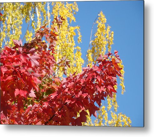 Autumn Metal Print featuring the photograph Autumn Trees Red Yellow Fall Tree Blue Sky Landsape by Baslee Troutman