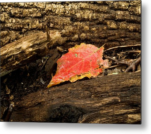 Death Metal Print featuring the photograph Autumn's End by Jim DeLillo