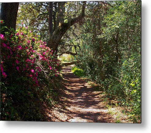 Azalea Metal Print featuring the photograph Azalea Path by Bob Johnson