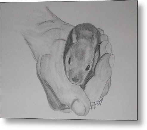 Metal Print featuring the drawing Baby Bunny by Kristen Hurley