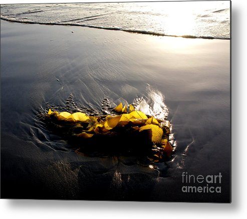 Kelp Metal Print featuring the photograph Backlit Kelp by PJ Cloud