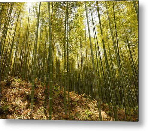 Bamboo Metal Print featuring the photograph Bamboo Forest by Erik Pearson
