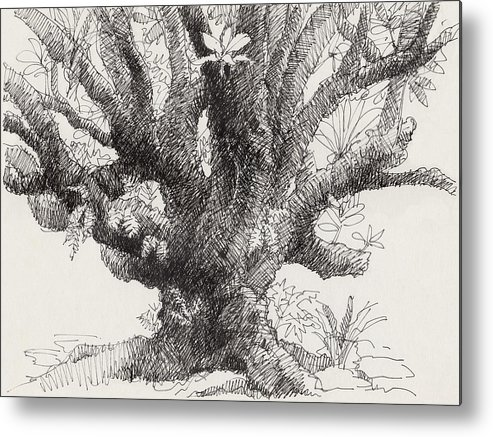 Plant Metal Print featuring the drawing Barringtonia Tree by Judith Kunzle