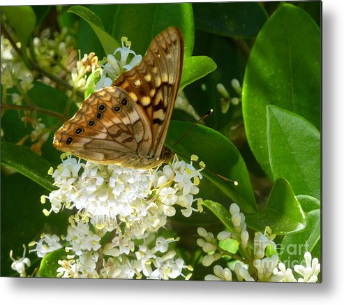 Nature Metal Print featuring the photograph Nature In The Wild - Basking In The Glow by Lucyna A M Green