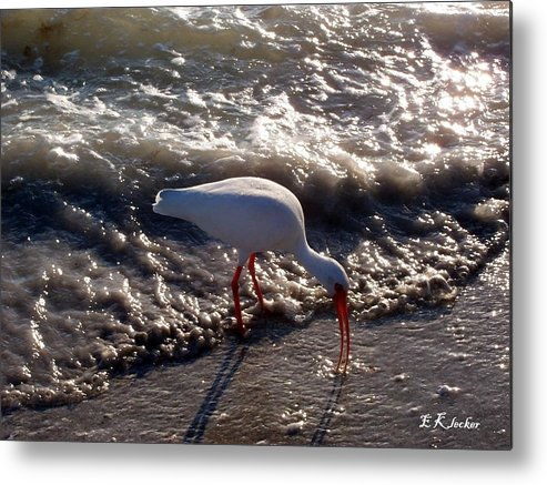 Beach Metal Print featuring the photograph Beach Bird by Elizabeth Klecker