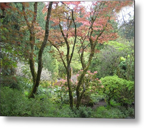 Scenery Metal Print featuring the photograph Beauty Among The Trees by Shirley Sirois