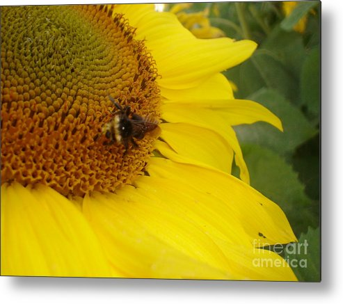 Bee Metal Print featuring the photograph Bee On Sunflower 3 by Chandelle Hazen