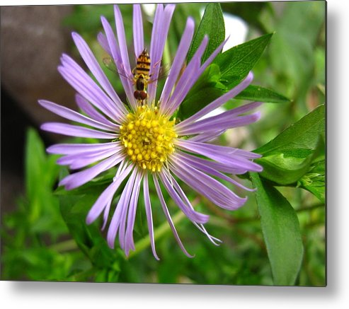 Bee Metal Print featuring the photograph Bee On Wildflower by Melissa Parks
