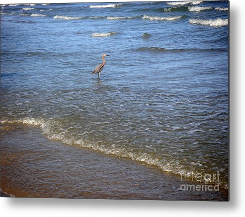 Nature Metal Print featuring the photograph Being One With The Gulf - Detached by Lucyna A M Green