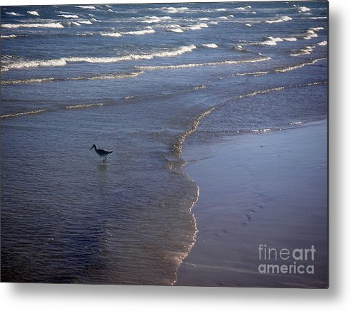 Nature Metal Print featuring the photograph Being One With The Gulf - Vigilant by Lucyna A M Green