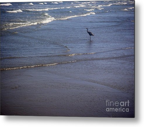 Nature Metal Print featuring the photograph Being One With The Gulf - Watching by Lucyna A M Green