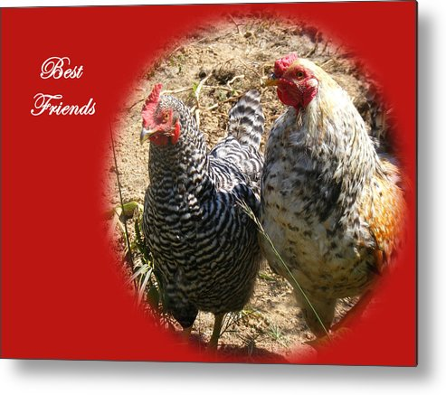 Chickens Metal Print featuring the photograph Best Friends by James and Vickie Rankin