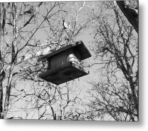 Bird Feeder Photo Black And White Metal Print featuring the photograph Bird Feeder From A String by James Granberry