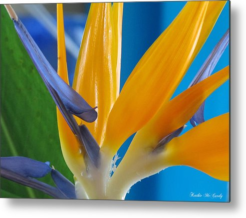 Orange Metal Print featuring the photograph Bird Of Paradise by Kathie McCurdy