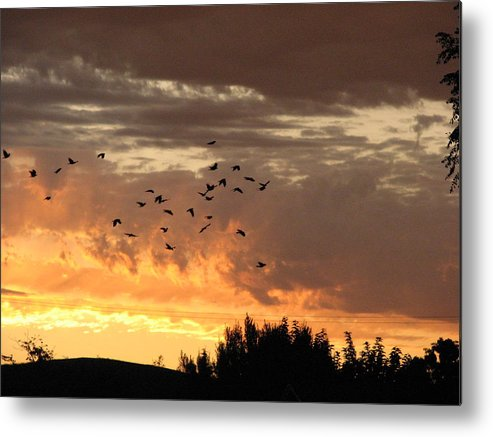 Birds Metal Print featuring the photograph Birds In The Sky by Kathy Roncarati