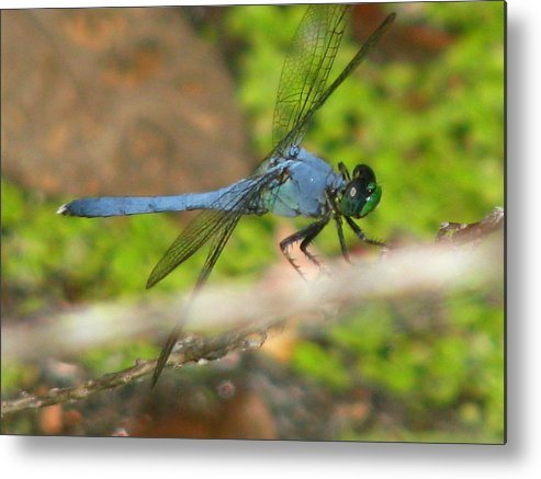 Dragonfly Metal Print featuring the photograph Black Wings by Paul Slebodnick