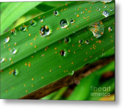 Plant Metal Print featuring the photograph Blades by PJ Cloud