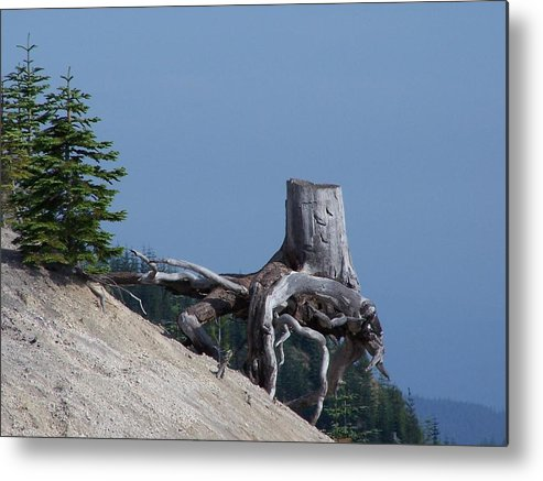 Landscape Metal Print featuring the photograph Blasted Stump by Gene Ritchhart