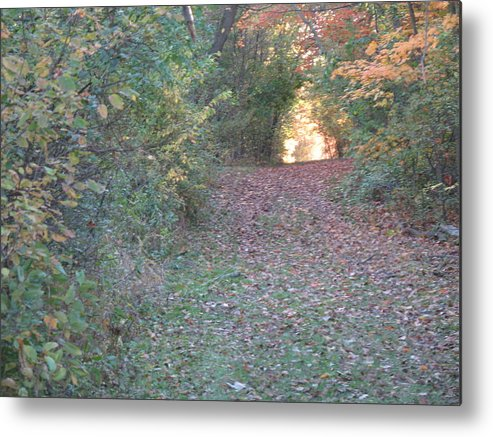 Nature Metal Print featuring the photograph Blazing Trail by Ralph Baginski