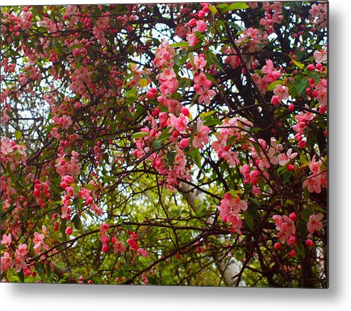 Flowers Metal Print featuring the photograph Blossoms In The Shanendoahs by Tammy Bullard