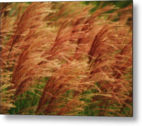 Win Metal Print featuring the photograph Blowing In The Wind by Gaby Swanson